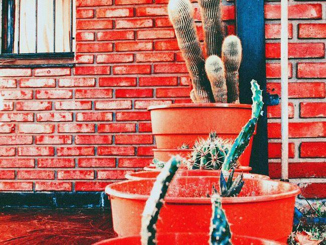 Cactus 🌵 Cactus Urban Buenosaires Macro Beautiful Cool Nice Photooftheday Nature Nature_collection