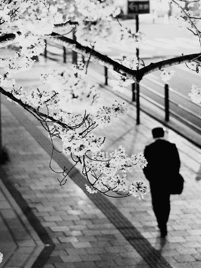 Shadow Lifestyles Walking Outdoors Men Real People Tree City Architecture One Person People Blackandwhite Black And White Collection  Black And White Collection  Monochrome _ Collection One Man Only Low Angle View Monochrome World Cityscape Escalator B&w Monochrome Collection Monochrome Photography Monochromeart Architecture_bw Monochrome Nature