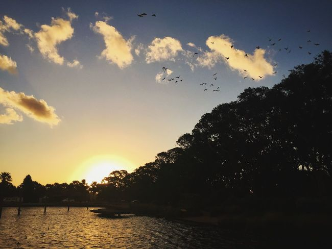 Centennial Park, Sydney | IG: @sayinghello Beauty In Nature Bird Birds Centennial Park  Cloudporn Flying Nature Nature Outdoors Silhouette Sky Sunset Sydney VSCO Water The Great Outdoors - 2017 EyeEm Awards