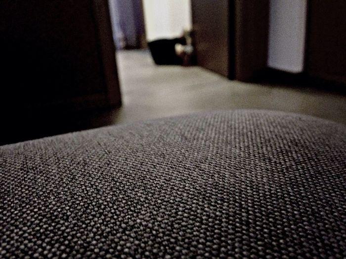Sofa Clean Casalinguo Lettiera