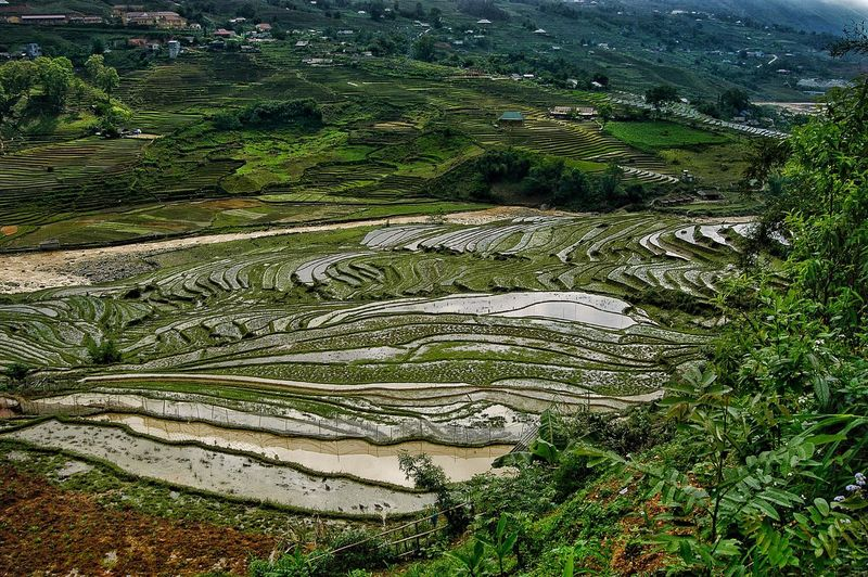 Vietnam SaPa Plant Growth Green Color Nature Tranquility High Angle View Beauty In Nature Day Landscape Land No People Tranquil Scene Scenics - Nature Field Environment Agriculture Rural Scene Outdoors Water Plantation