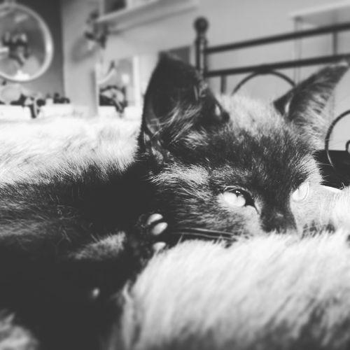 Kitten's day: