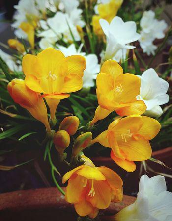 Orange Flower Flowers Flower Collection Flower Photography EyeEm Gallery Flowers_collection EyeEm Best Shots EyeEm Nature Lover Eye4photography  EyeEm Best Edits EyeEmBestPics