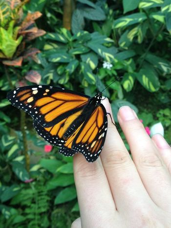 Animal Wildlife Animals In The Wild Beauty Butterfly Butterfly - Insect Butterfly On My Hand Close-up Freshness Hand Holding Human And Nature Human Body Part Human Hand In My Hand Insect Nature On My Hand One Animal Outdoors Live For The Story