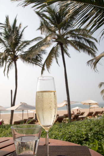Champagne glass and water overlooking tropical beach scene Beach Clear Sky Close-up Day Drinking Glass Food And Drink Horizon Over Water No People Outdoors Palm Tree Sea Sky Slanted Table Tree Tropical Climate Water Wineglass