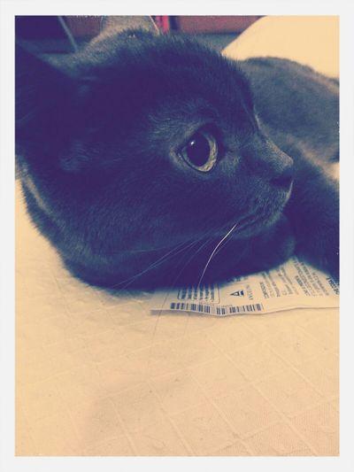 Mycat Catstagram Eyecat