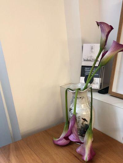 Indoors  Flower