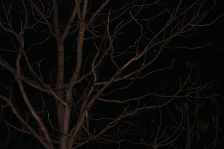 Check This Out Night Photography Tree In Autumn No Leafs Darkness And Light Taking Photos Natural Pattern Eyeem India Field Outdoor Photography Non-urban Scene Nature EyeEm India Beauty In Nature Tree No People Eyeem India