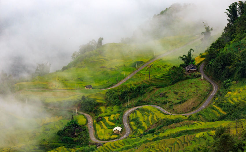 YTY near sapa is very nice landscape with rice harvest and clouds season at the same time Harvest Season Rice Harvest Road Trip, Agriculture Field No People Outdoors Tree Agriculture Photography Asia Landscape Beauty In Nature Foggy Morning Landscape Mu Cang Chai Mu Cang Chai - Yen Bai Mucang Chai Terrace Mucangchai Landscape Mucangchai Vietnam Rice Terraces Road On Clouds Sapa Landscape, Scenics - Nature Terrace Field Vietnam Agriculture Vietnam Landscape, Vietnam Terraces View From Above, Watering Season Yty Near Sapa