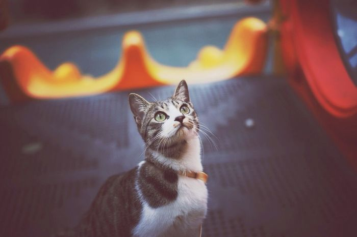 우리 랭이도 산책냥이 됐어요 Wrang-E Cat Walking With The Cat