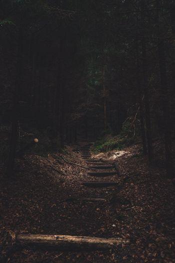 Hikingadventures Hiking Trail Hiking Nature Backgrounds Forest Road Road In The Woods Lonely Road Old Forest In The Woods Sächsische Schweiz Saxon Switzerland Night Tranquility No People Beauty In Nature Nature Land Scenics - Nature Tranquil Scene Forest Illuminated Dark Idyllic Outdoors Growth