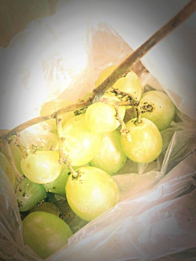 Grape Uvas