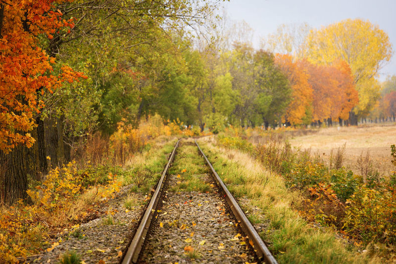 Railroad track amidst trees during autumn