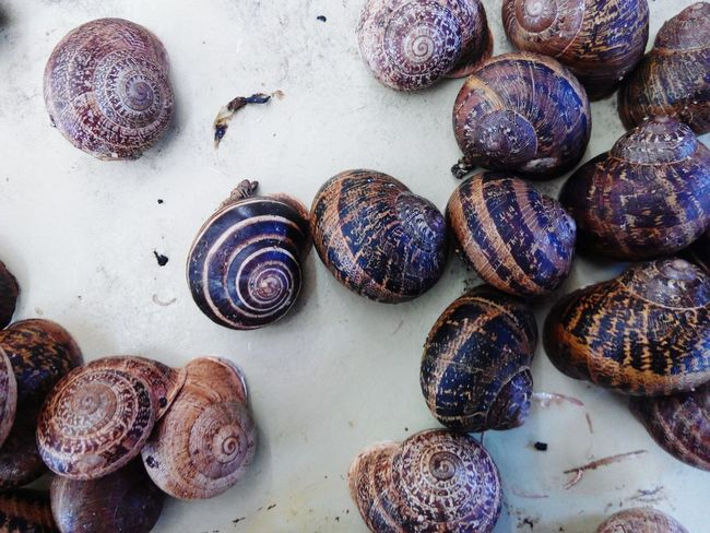 Schnecke Snail🐌 Snail Gastropod Slow Animal Antenna Purple Mollusk Ground Slimy Slug Antenna Shell Prepared Food Wisteria Iris - Plant Osteospermum Crawling Animal Shell Seashell Served Crocus Pastry Raw