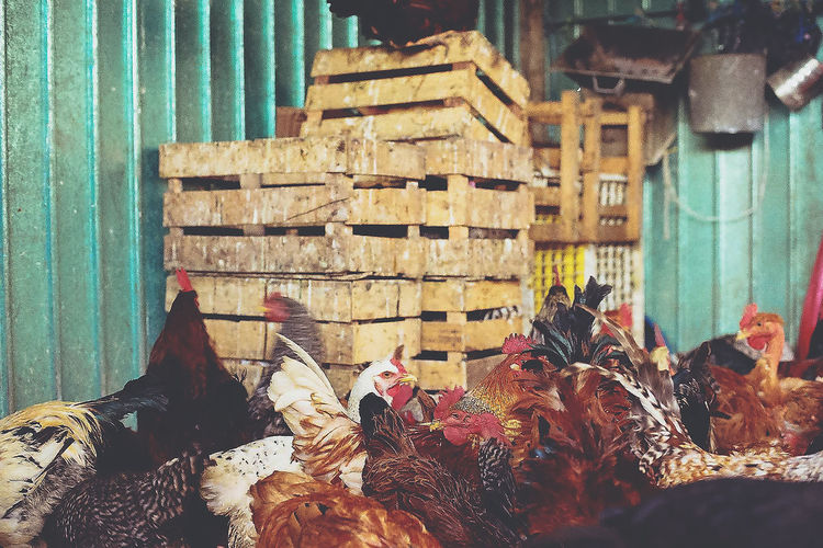 Chickens In Market Stall For Sale