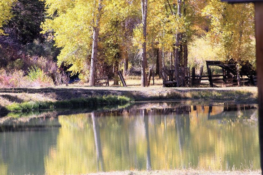 Tree Reflection Plant Water Lake Tranquility Nature Beauty In Nature No People Tranquil Scene Waterfront Scenics - Nature Day Growth Autumn Outdoors Park Forest Trunk Change