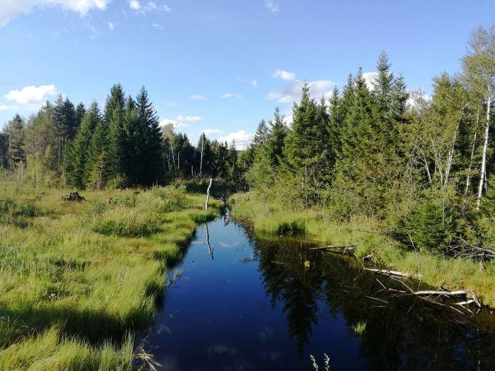 Outdoors Water Nature Forest Tree Sky Day Beauty In Nature Bavaria Allgäu Allgaeu Werdensteinermoos Moos
