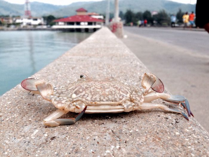 Pier Koh Samui Thailand Sea Moments Crab Spotted In Thailand
