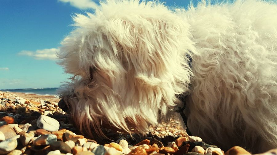 Chill Mode Friendship Dog EyeEm Selects Water Sea Beach Power In Nature Motion Heat - Temperature Sky Close-up Horizon Over Water Pebble Beach