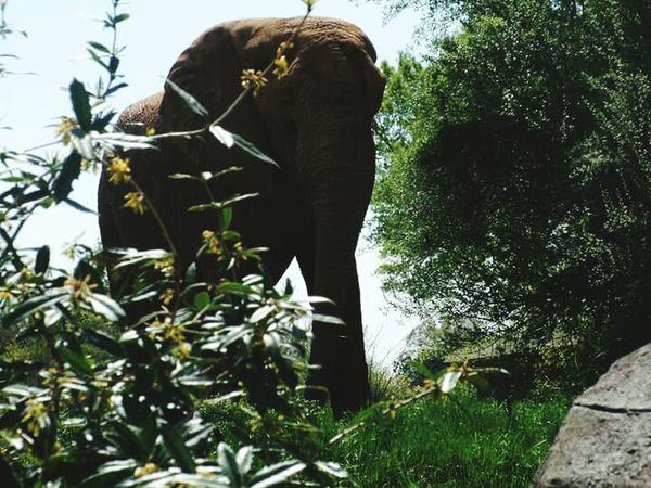 Elephant at zoo Elephant ♥ Outdoors Plant