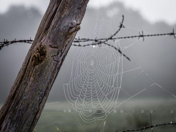 Autum Cobweb Detail Dew No People Spider Web Spider's Web Wet