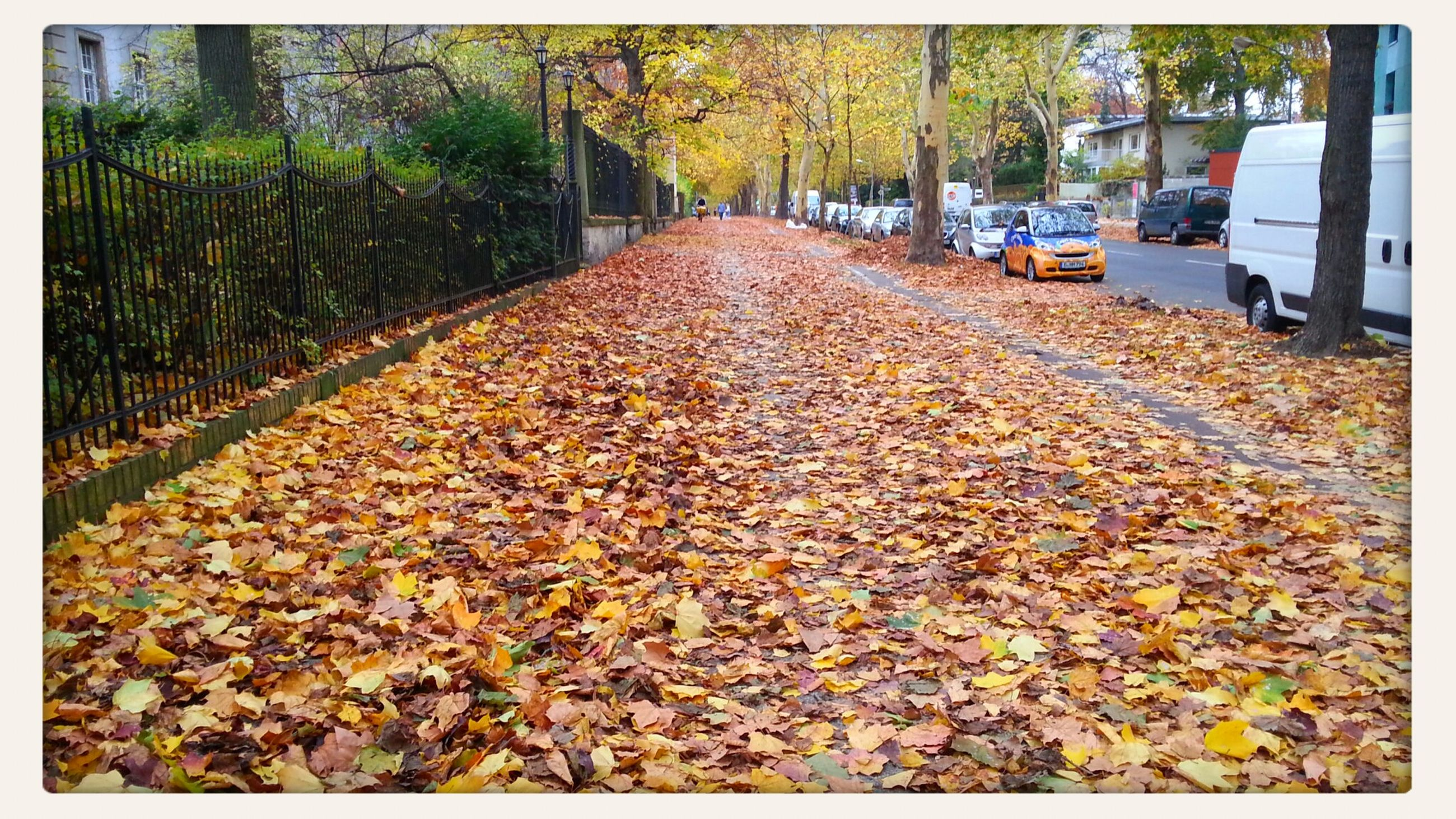 autumn, transportation, the way forward, tree, leaf, diminishing perspective, street, change, road, season, surface level, vanishing point, auto post production filter, dry, car, fallen, transfer print, outdoors, day, leaves