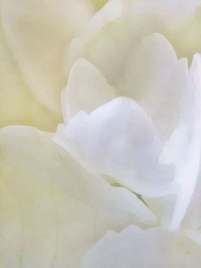 Close-up of white flower