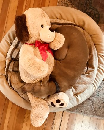 A New Pal Childhood Christmas Gift Close-up Day Doll Indoors  New Friend New Pal No People Snugglebuddy Stuffed Toy Teddy Bear Toy Weimaraner