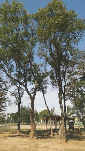 My Country In A Photo 20150521 Taoyuan City Nature_collection Kate's Daily