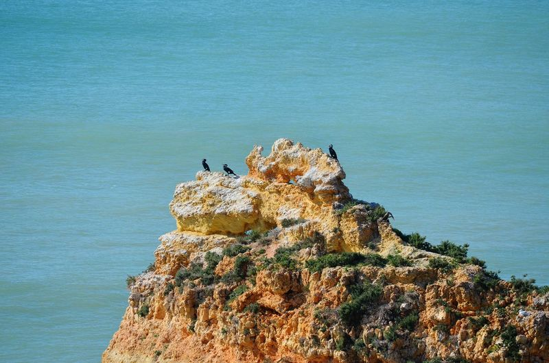 Rocky Beach Portugal Praia Da Marinha Algarve Ocean Birds Water Sea Bird Tree Rock - Object High Angle View Sky Horizon Over Water Rock Formation Rock Geology Rocky Mountains Calm Cliff Rocky Coastline