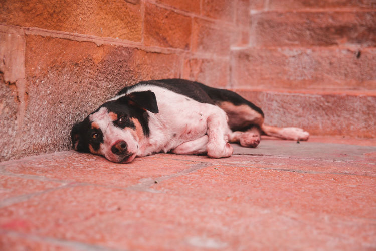 Portrait of a dog sleeping on wall