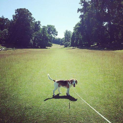 Beagle Dog Nature Park Summer