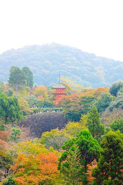 Capture The Moment 清水寺 Garden Kyoto Autumn Fall KiyomizuTemple Autumn Leaves Japan 日本 京都 Kiyomizu-dera
