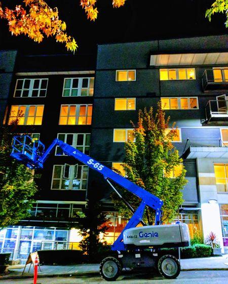 Trees against illuminated building