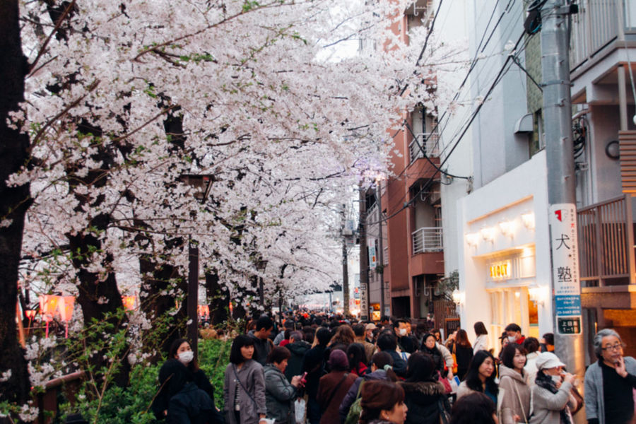 Cherry Blossoms EyeEm Selects EyeEmNewHere Film Happy People Japan Japanese Culture Nature On Your Doorstep Sakura The Journey Is The Destination The Tourist Tokyo Travel Urban Spring Fever VSCO Crowd Enjoyment Flower People Scenery Spring Spring Flowers Springtime Travel Destinations Walking Around The City