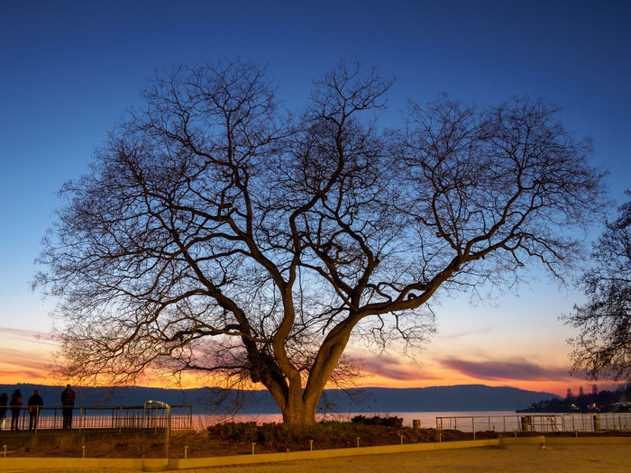 Bare tree on field against sky at sunset