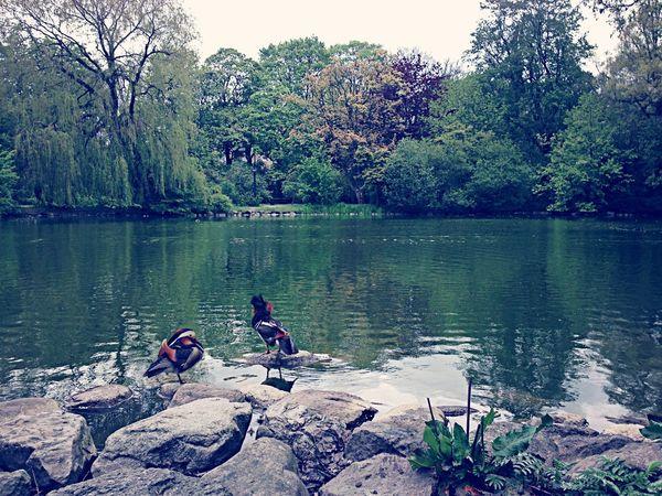 Urban Nature Birds