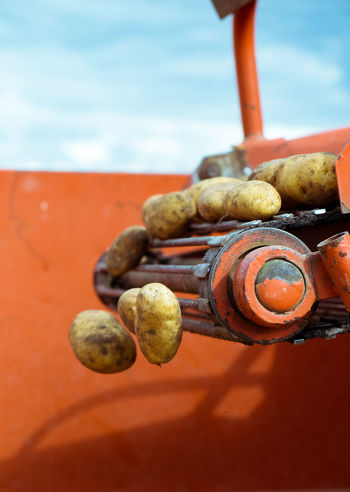 Close-up Day Focus On Foreground Food Freshness Machine Organic Outdoors Potato Potatoes Selective Focus Sky Still Life