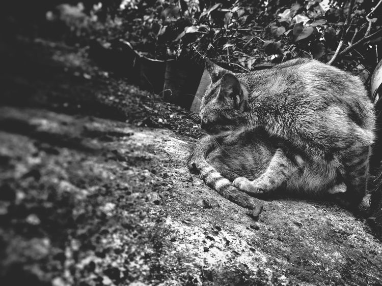 CAT IN BLACK EyeEmNewHere Animal Themes Black Cat One Animal Outdoors