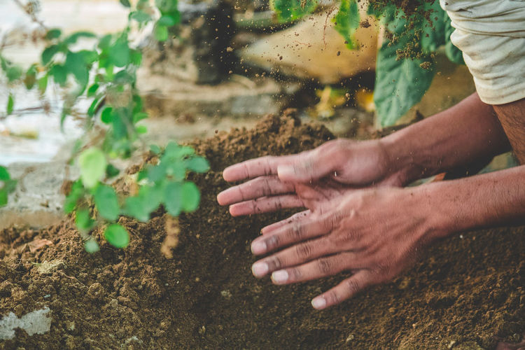 Cropped hands planting in yard