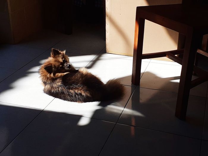 Cat sitting on floor at home