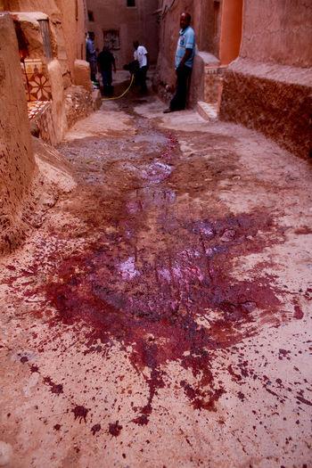 IN SACRIFICE Animal Blood Culture Documentary Photography Massacre Morocco Rams Sacrifice Tradition Travel