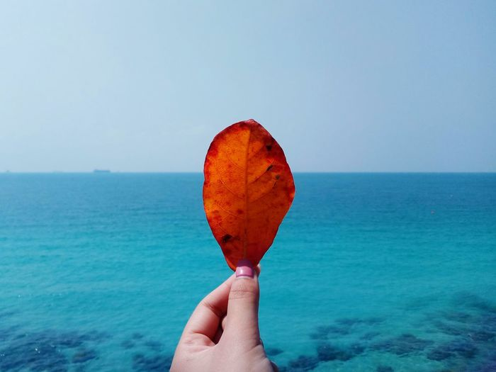 Cropped hand holding leaf against sea