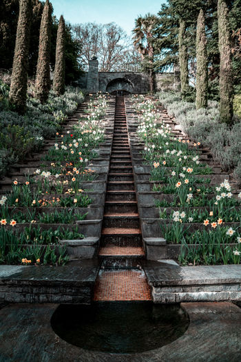 Staircase on Isle of Mainau, Germany Plant The Way Forward Tree Direction Nature Growth Day No People Land Tranquility Staircase Outdoors Architecture Diminishing Perspective Wood - Material Beauty In Nature Footpath Solid Forest Built Structure Long Insel Mainau Mainau Germany Konstanz
