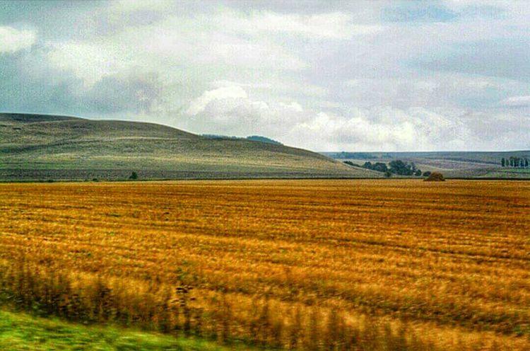 Russia Bashkiria Bashkortostan Grow Grass Field Ears Summer Summer Views