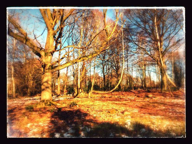 Woods Tree Landscape Autumn Autumn Colors