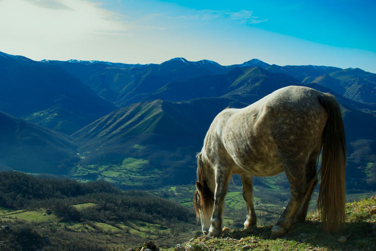 Wild horse standing in a mountains