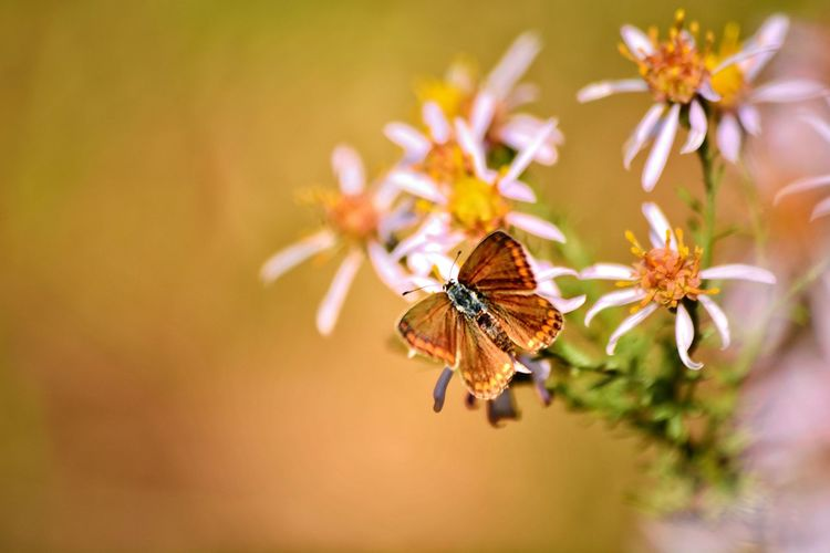 Flower Perching Butterfly - Insect Insect Full Length Bright Close-up Animal Themes