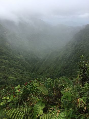 Dominica Agriculture Beauty In Nature Day Fog Foggy Green Color Hazy  High Angle View Idyllic Landscape Lush Foliage Mist Mountain Mountain Range Nature No People Outdoors Plant Scenics Tea Crop Tranquil Scene Tranquility Tree Weather