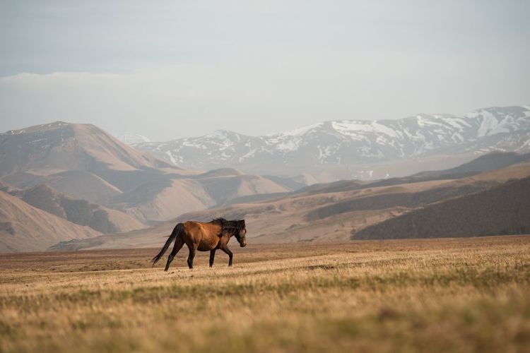 Horse in a field